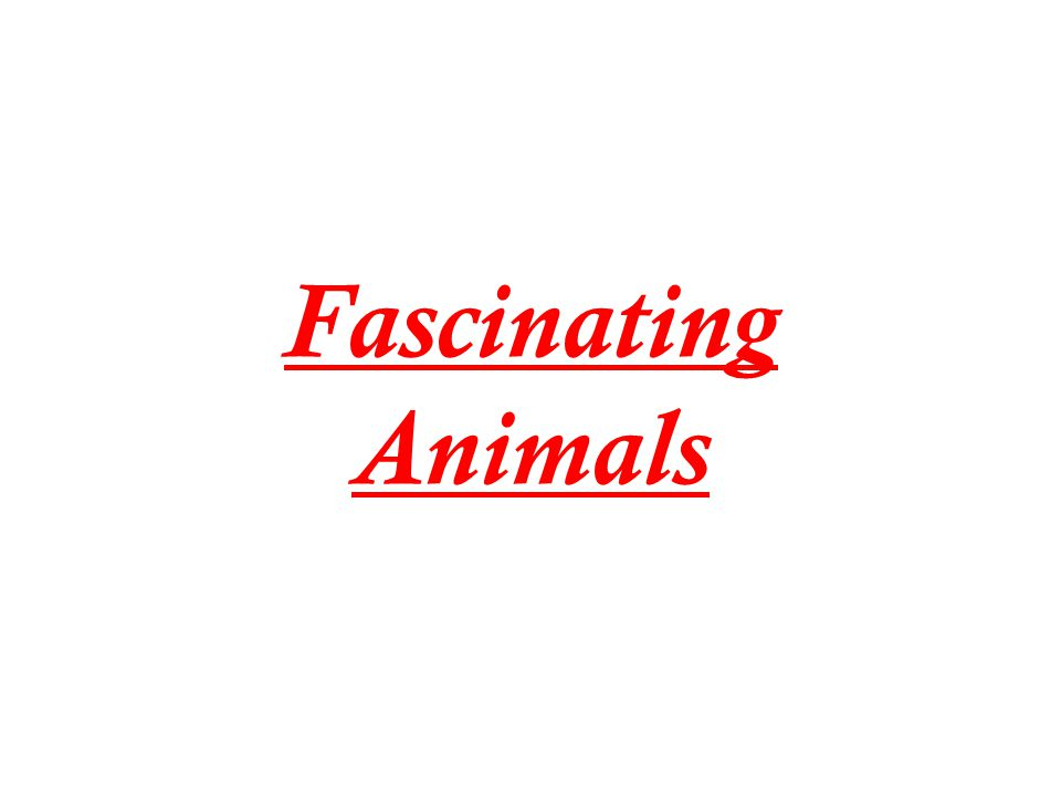 Fascinating Animals