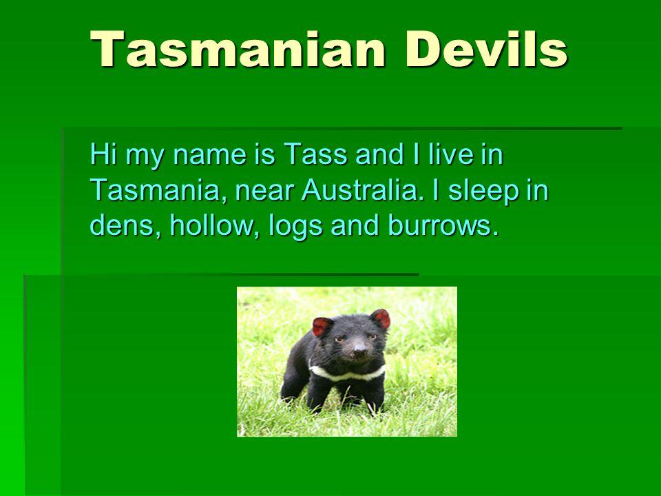 Tasmanian Devils Tasmanian Devils Hi my name is Tass and I live in Tasmania, near Australia. I sleep in dens, hollow, logs and burrows.