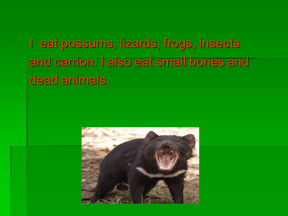 I eat possums, lizards, frogs, insects and carrion. I also eat small bones and dead animals.