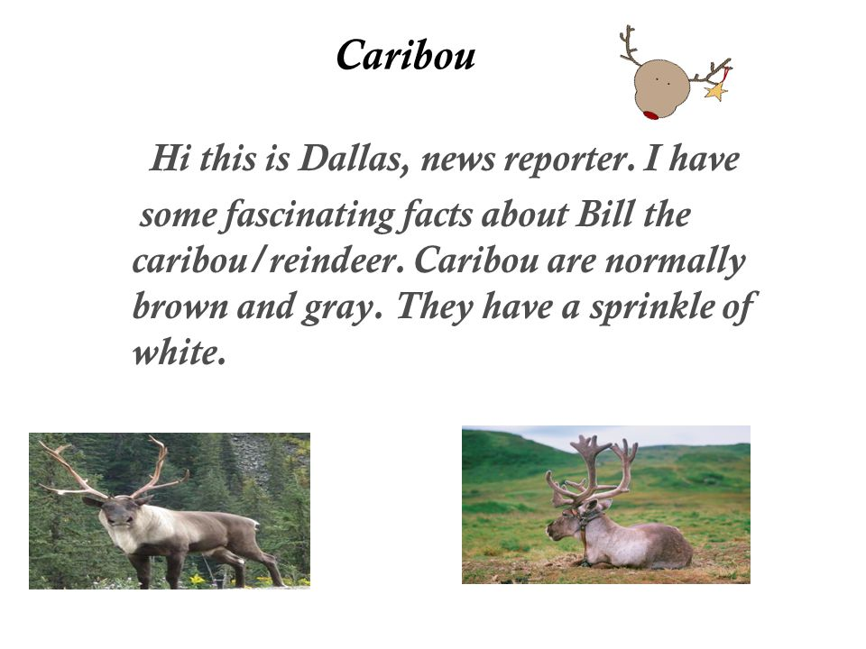 Caribou Hi this is Dallas, news reporter.