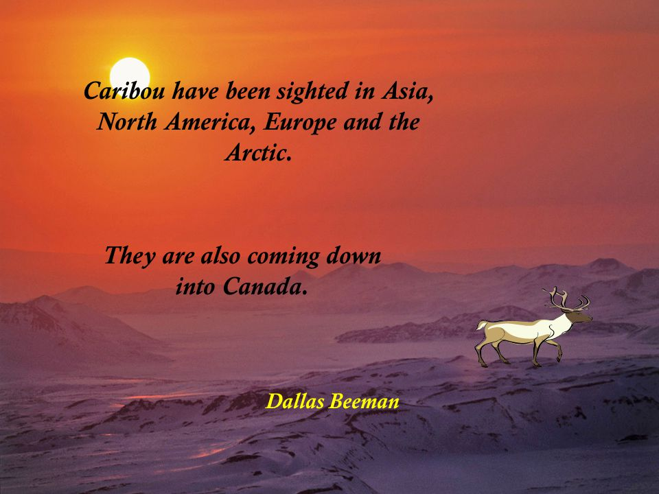 Caribou have been sighted in Asia, North America, Europe and the Arctic.