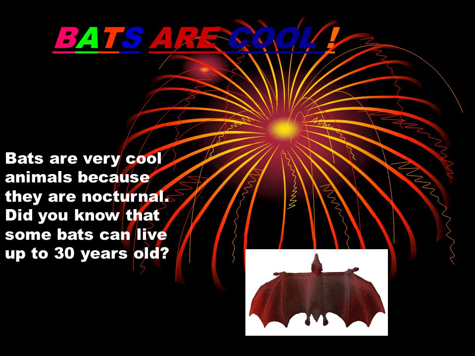 BATS ARE COOL . Bats are very cool animals because they are nocturnal.
