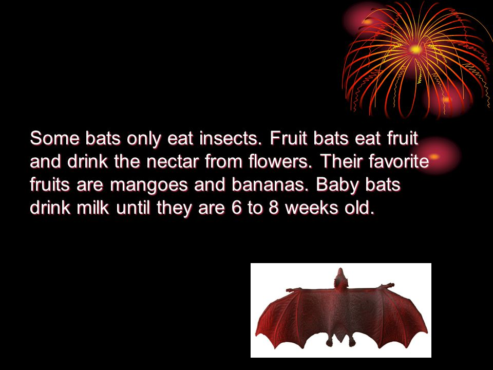 Some bats only eat insects. Fruit bats eat fruit and drink the nectar from flowers.