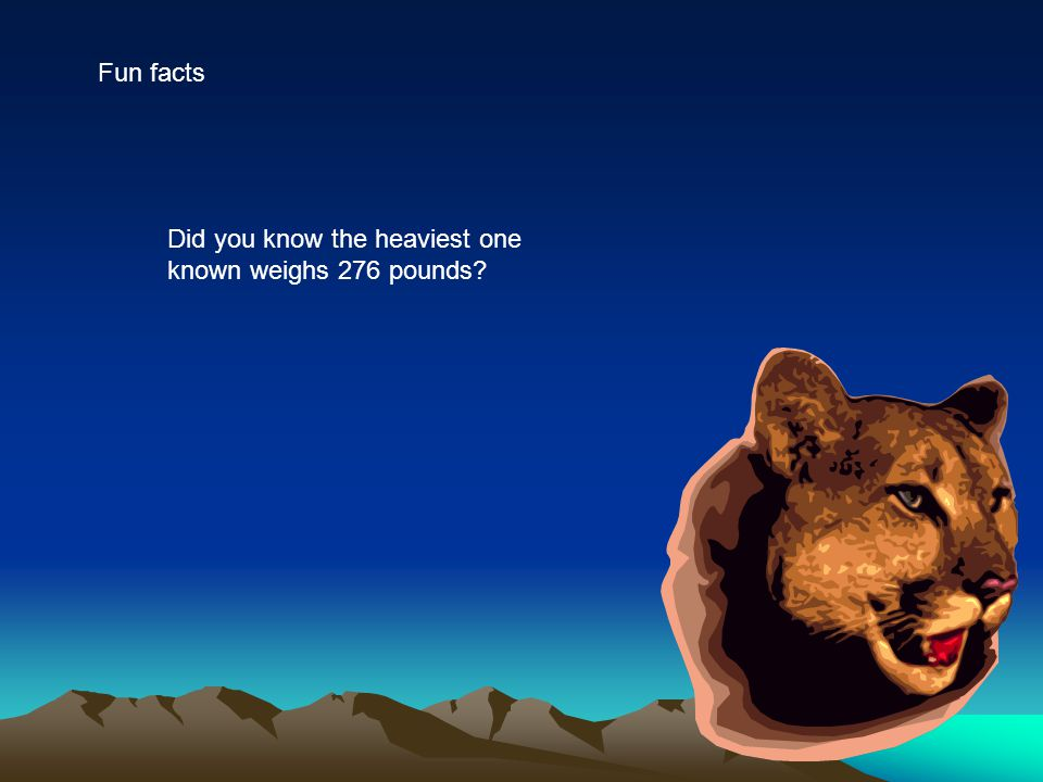 Fun facts Did you know the heaviest one known weighs 276 pounds?