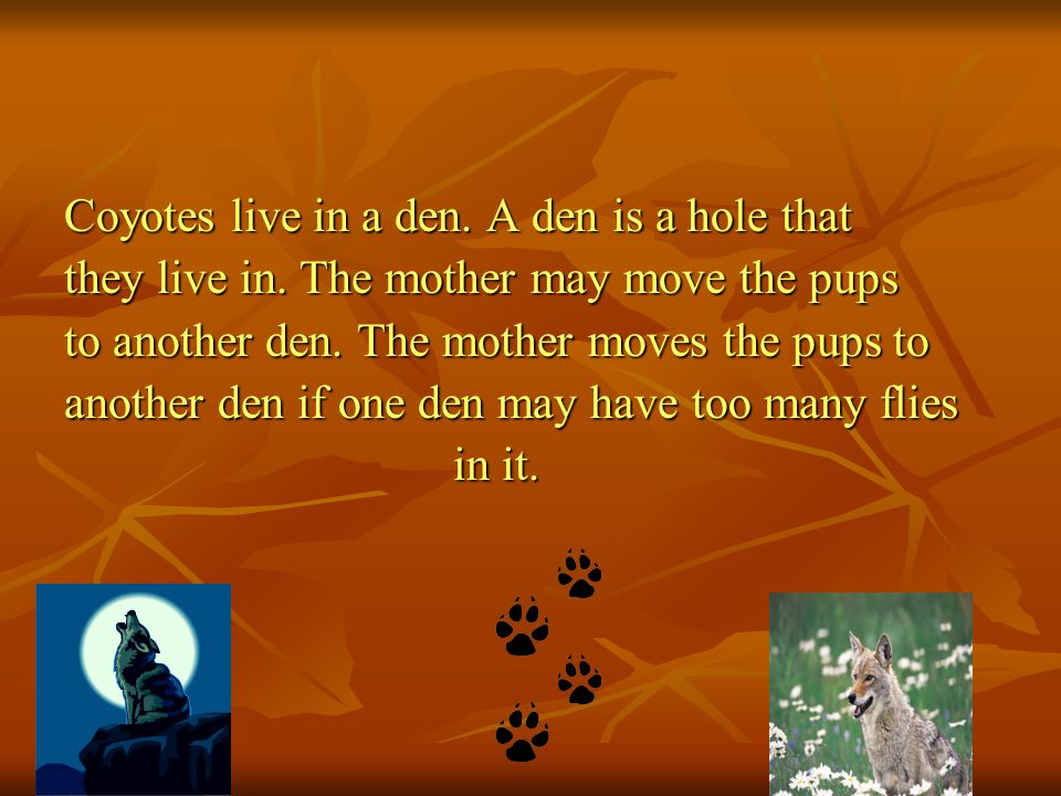 Coyotes live in a den. A den is a hole that they live in.