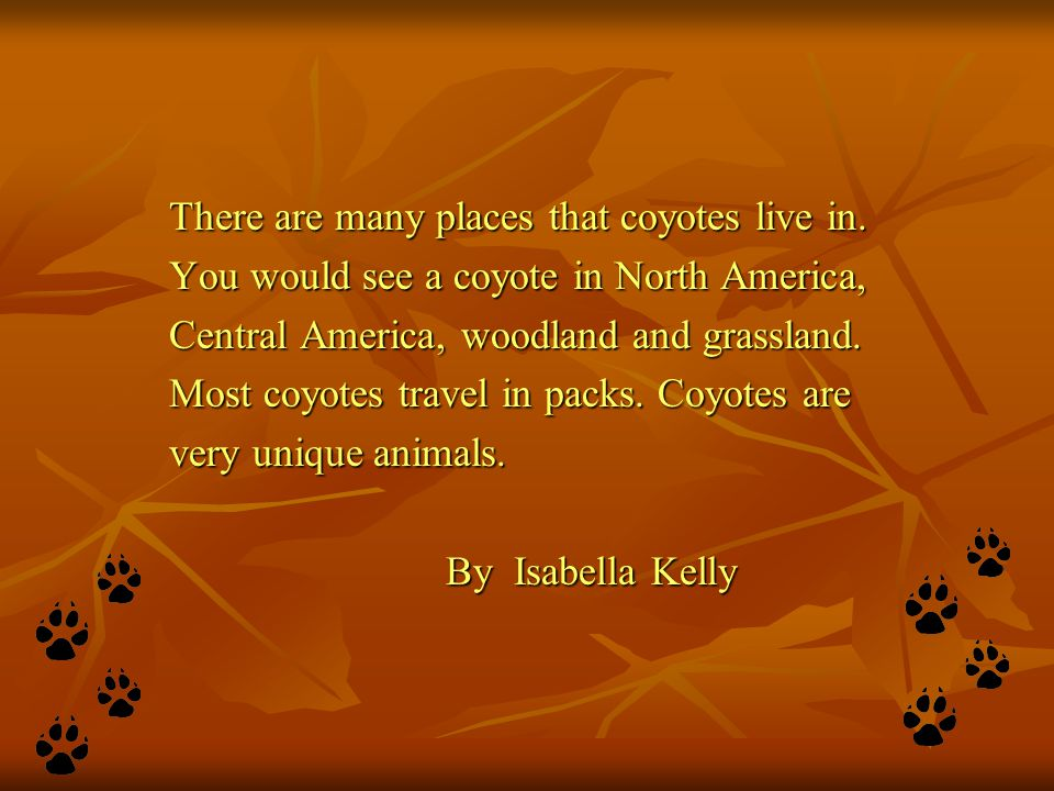 There are many places that coyotes live in. You would see a coyote in North America, Central America, woodland and grassland. Most coyotes travel in p