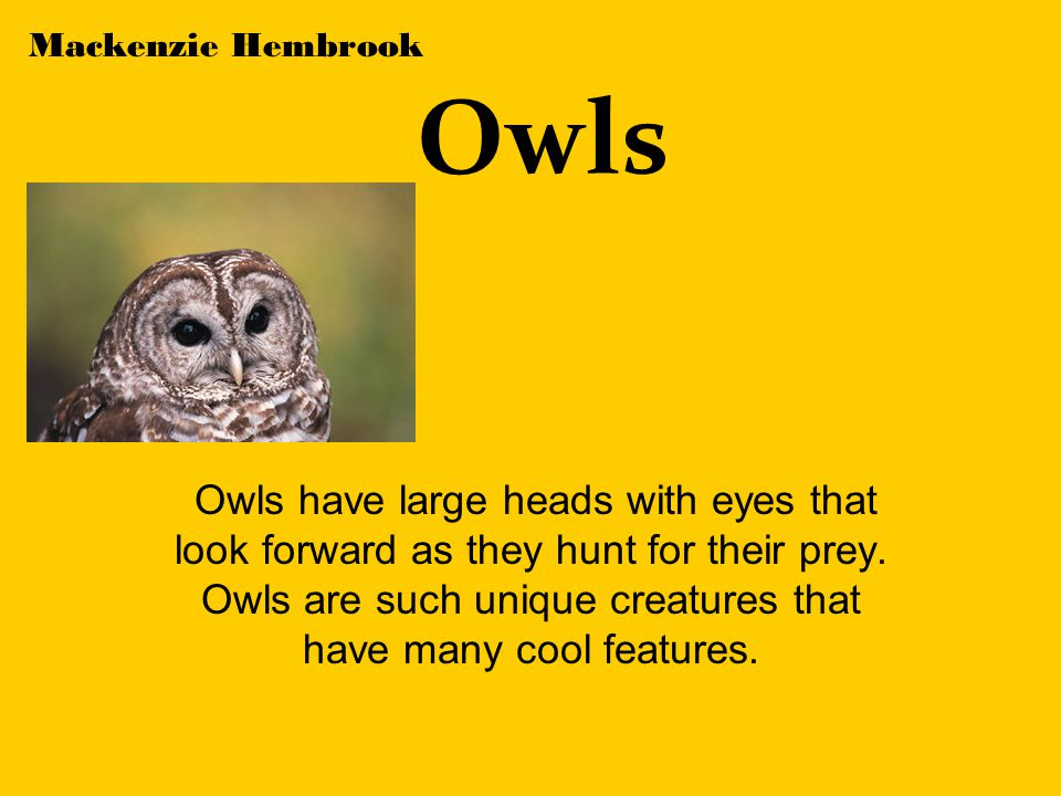 Owls Owls have large heads with eyes that look forward as they hunt for their prey.