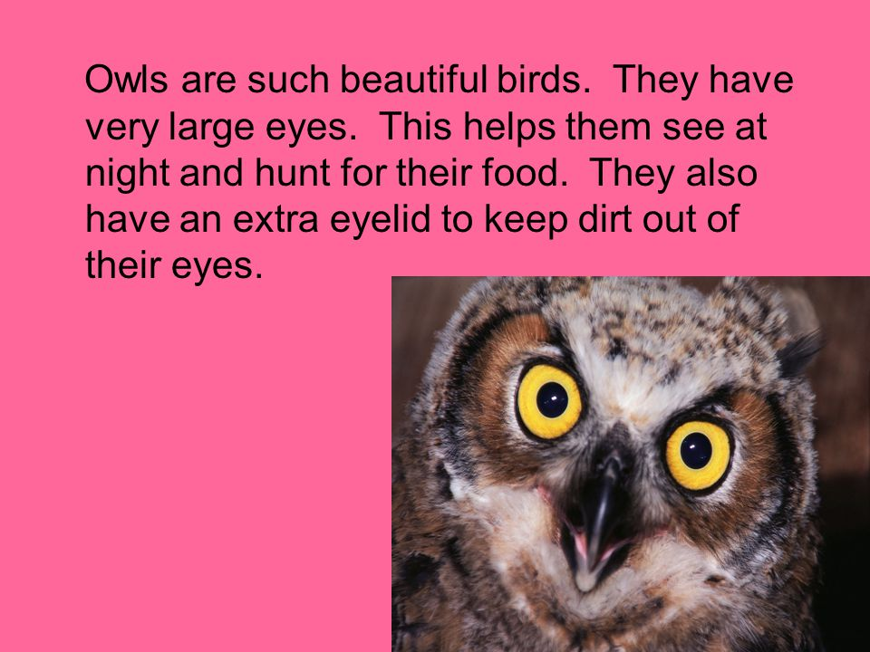 Owls are such beautiful birds. They have very large eyes. This helps them see at night and hunt for their food. They also have an extra eyelid to keep