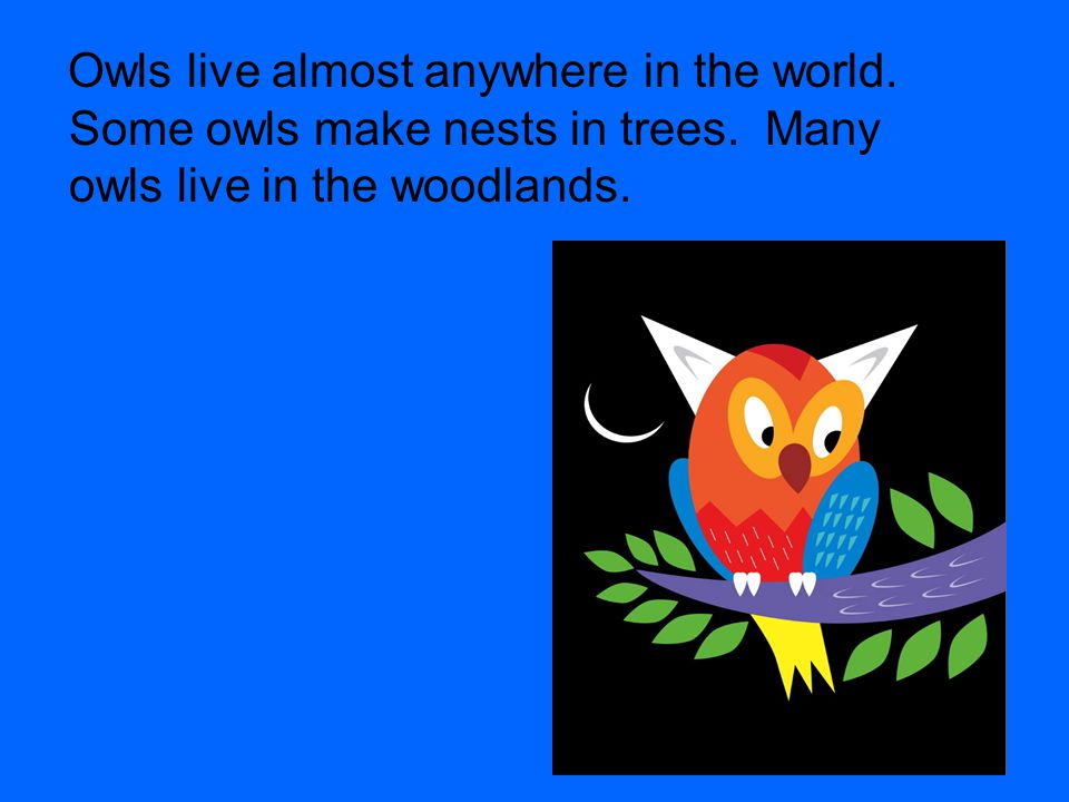 Owls live almost anywhere in the world. Some owls make nests in trees.