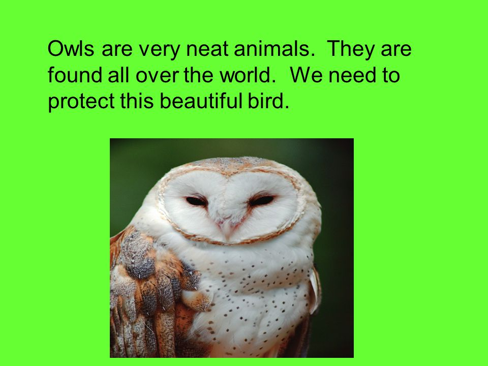 Owls are very neat animals. They are found all over the world.