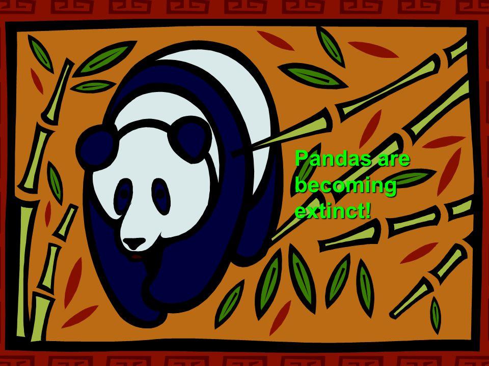  becoming extinct Pandas are becoming extinct!