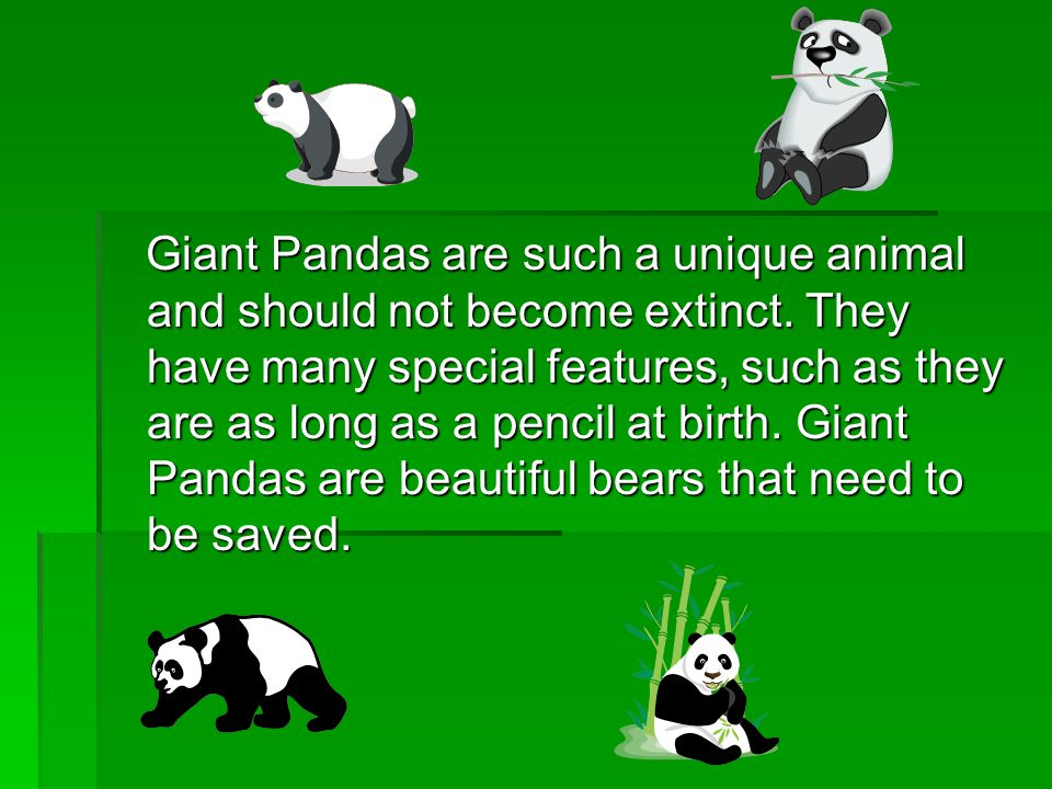 Giant Pandas are such a unique animal and should not become extinct. They have many special features, such as they are as long as a pencil at birth. G