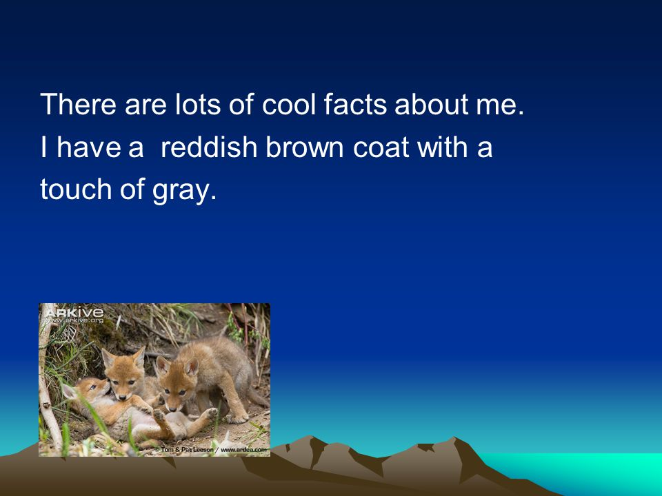 There are lots of cool facts about me. I have a reddish brown coat with a touch of gray.