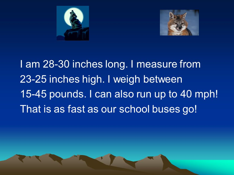 I am 28-30 inches long. I measure from 23-25 inches high. I weigh between 15-45 pounds. I can also run up to 40 mph! That is as fast as our school bus