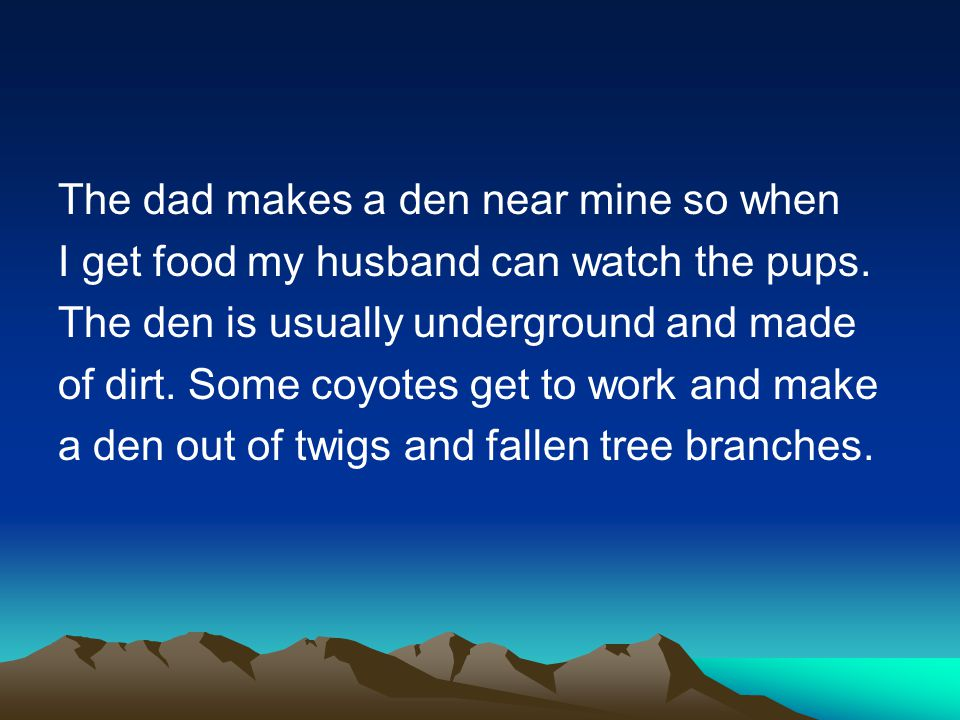 The dad makes a den near mine so when I get food my husband can watch the pups. The den is usually underground and made of dirt. Some coyotes get to w