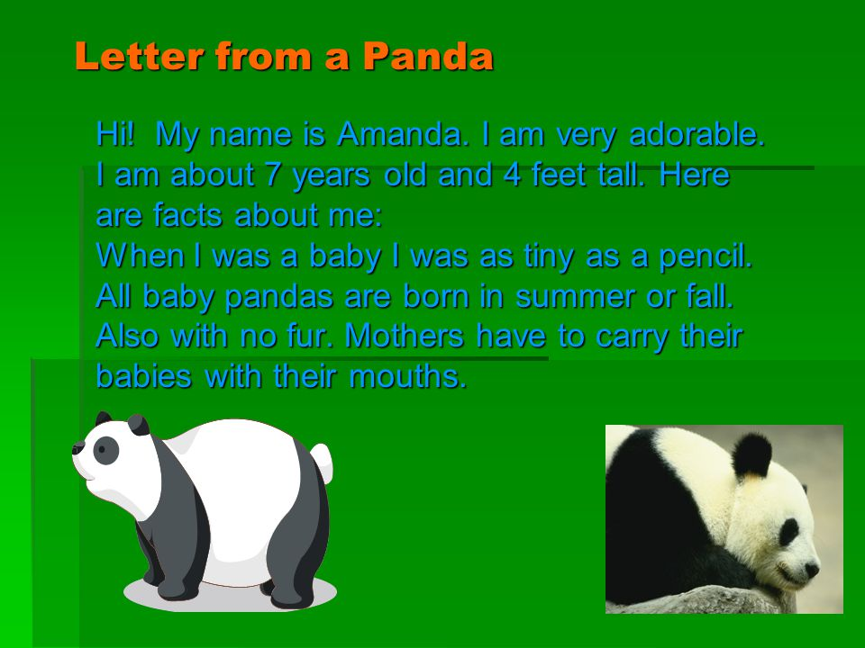 Letter from a Panda Hi! My name is Amanda. I am very adorable. I am about 7 years old and 4 feet tall. Here are facts about me: When I was a baby I wa