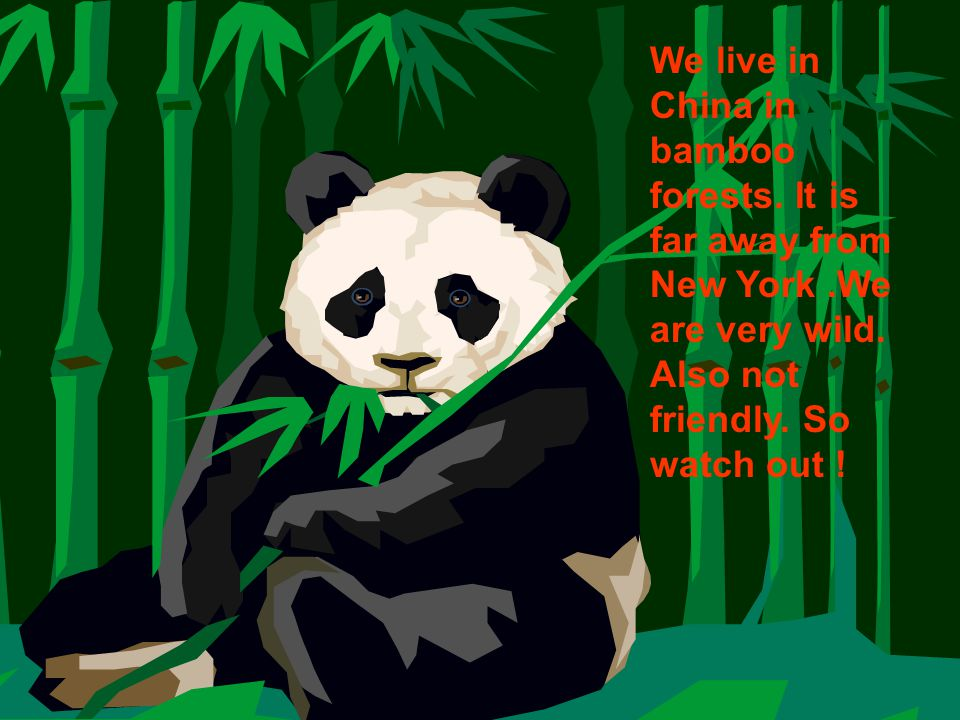 We live in China in bamboo forests. It is far away from New York.We are very wild.