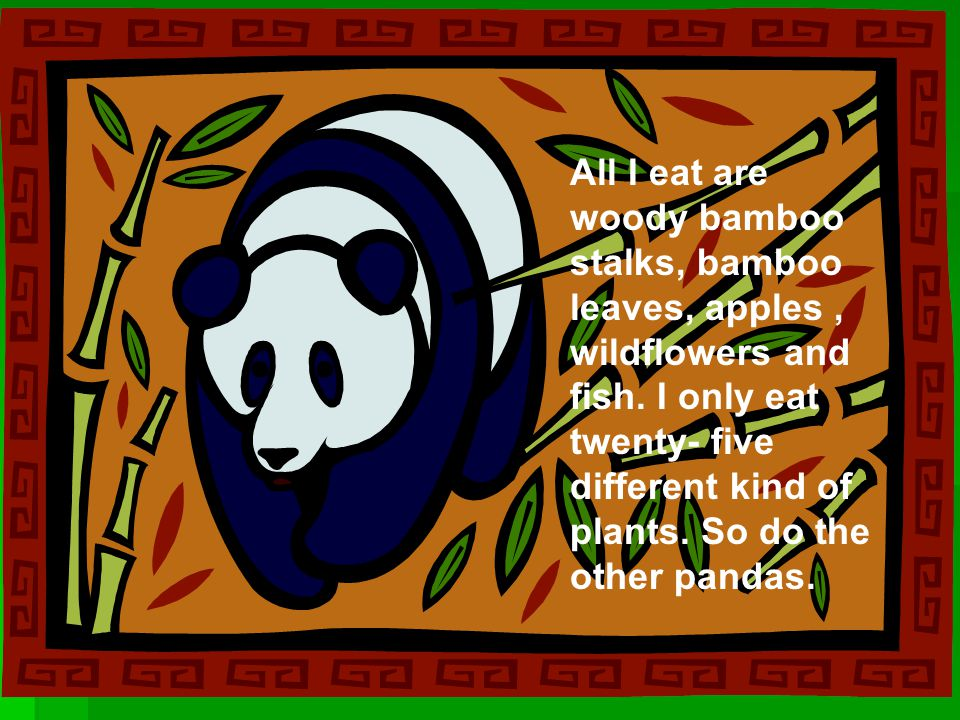 All I eat are woody bamboo stalks, bamboo leaves, apples, wildflowers and fish. I only eat twenty- five different kind of plants. So do the other pand