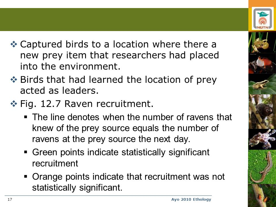 Ayo 2010 Ethology17  Captured birds to a location where there a new prey item that researchers had placed into the environment.