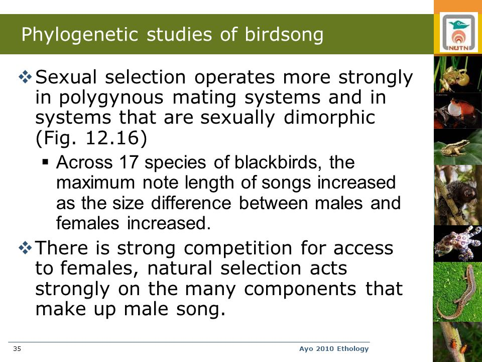 Ayo 2010 Ethology35 Phylogenetic studies of birdsong  Sexual selection operates more strongly in polygynous mating systems and in systems that are sexually dimorphic (Fig.