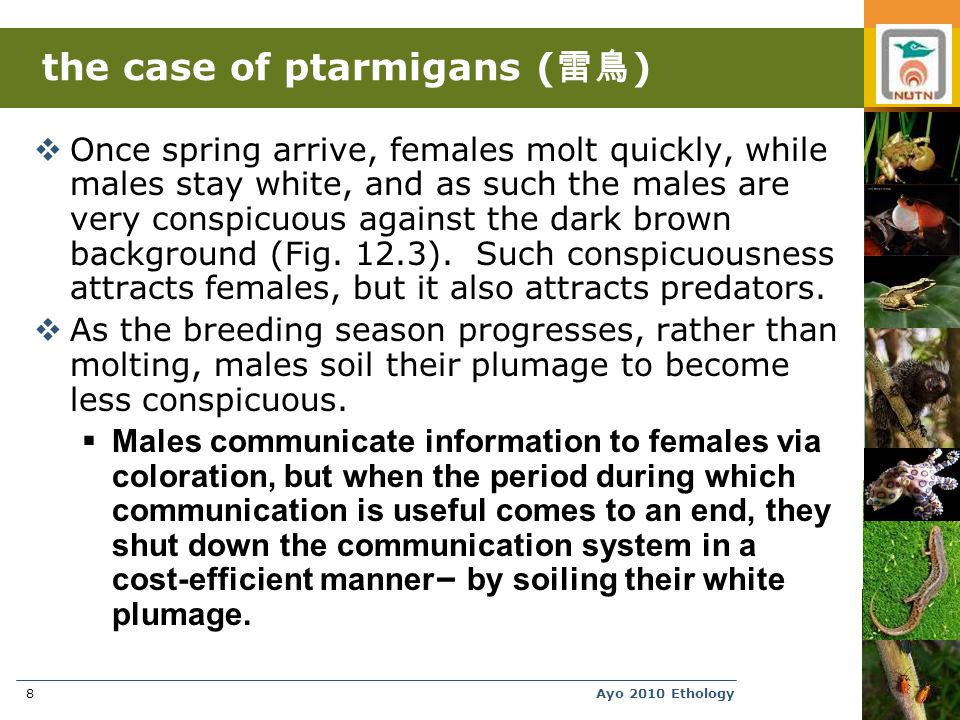 Ayo 2010 Ethology8 the case of ptarmigans ( 雷鳥 )  Once spring arrive, females molt quickly, while males stay white, and as such the males are very conspicuous against the dark brown background (Fig.