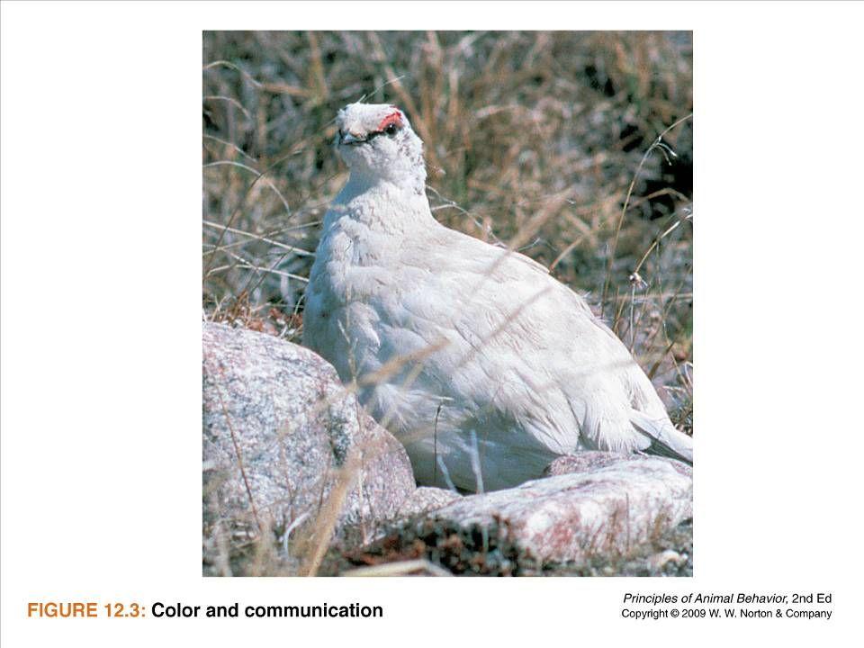 Ayo 2010 Ethology50