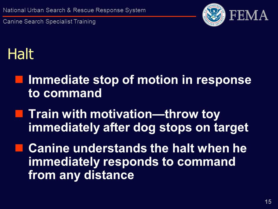 15 National Urban Search & Rescue Response System Canine Search Specialist Training Halt Immediate stop of motion in response to command Train with motivation—throw toy immediately after dog stops on target Canine understands the halt when he immediately responds to command from any distance