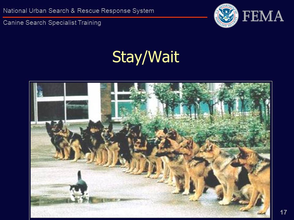 17 National Urban Search & Rescue Response System Canine Search Specialist Training Stay/Wait