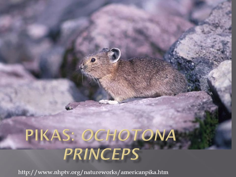  Suitability modeling: Geographic Information System  Help to predict when and where pika populations will decline