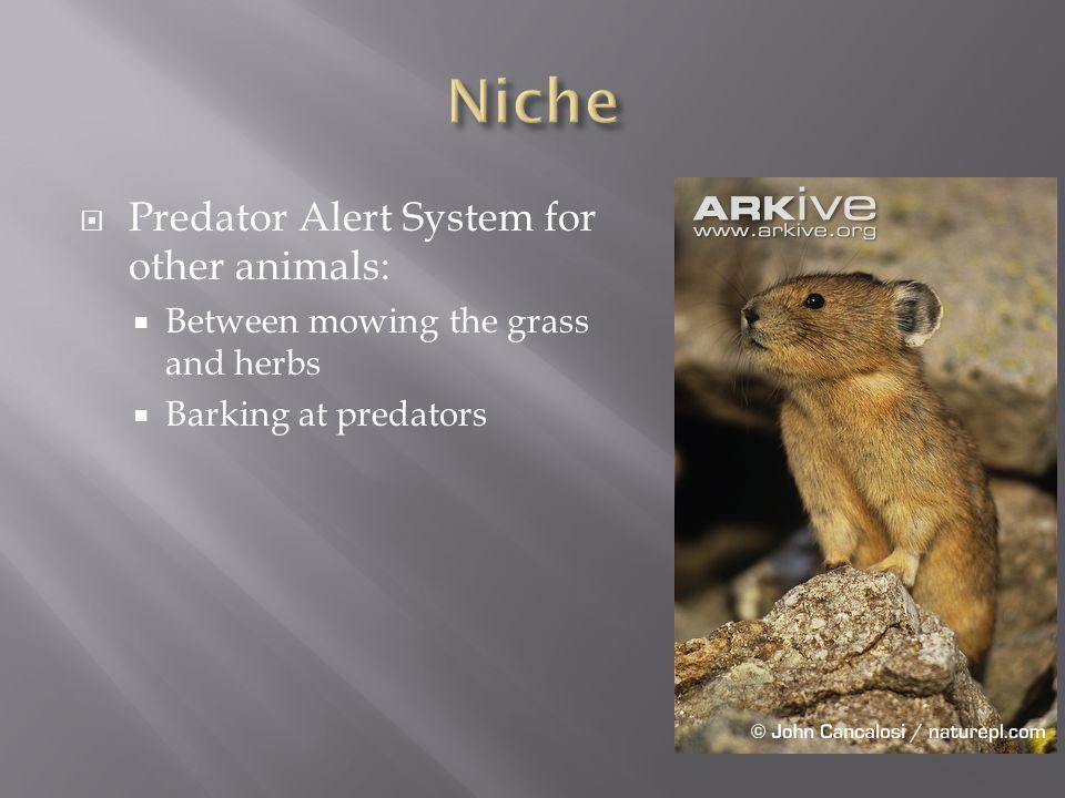 http://raysweb.net/wildlife /images/pika_new.jpg http://www.animalspot.net /wp- content/uploads/2011/07/Pi cture-of-American-Pika.jpg