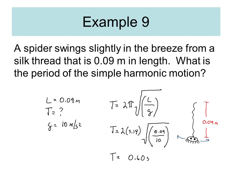 A spider swings slightly in the breeze from a silk thread that is 0.09 m in length. What is the period of the simple harmonic motion? Example 9