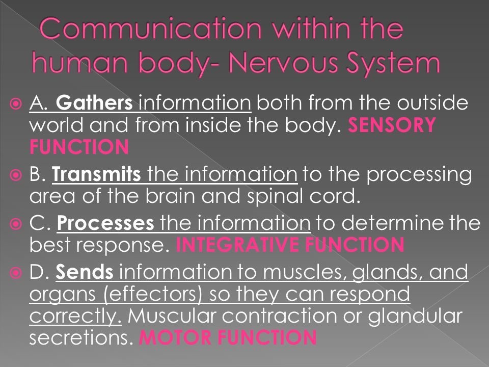 A. Gathers information both from the outside world and from inside the body.