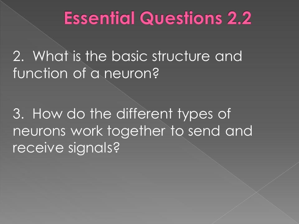 2.What is the basic structure and function of a neuron.