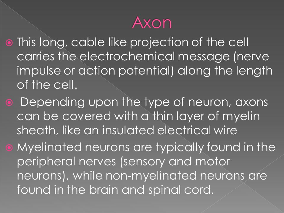  This long, cable like projection of the cell carries the electrochemical message (nerve impulse or action potential) along the length of the cell.