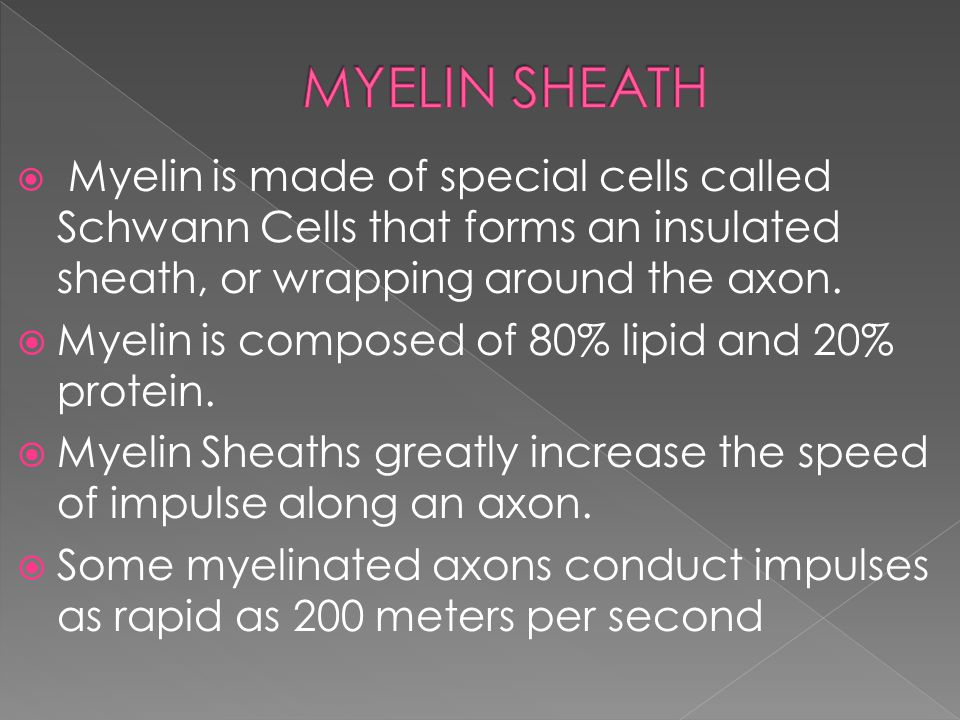  Myelin is made of special cells called Schwann Cells that forms an insulated sheath, or wrapping around the axon.