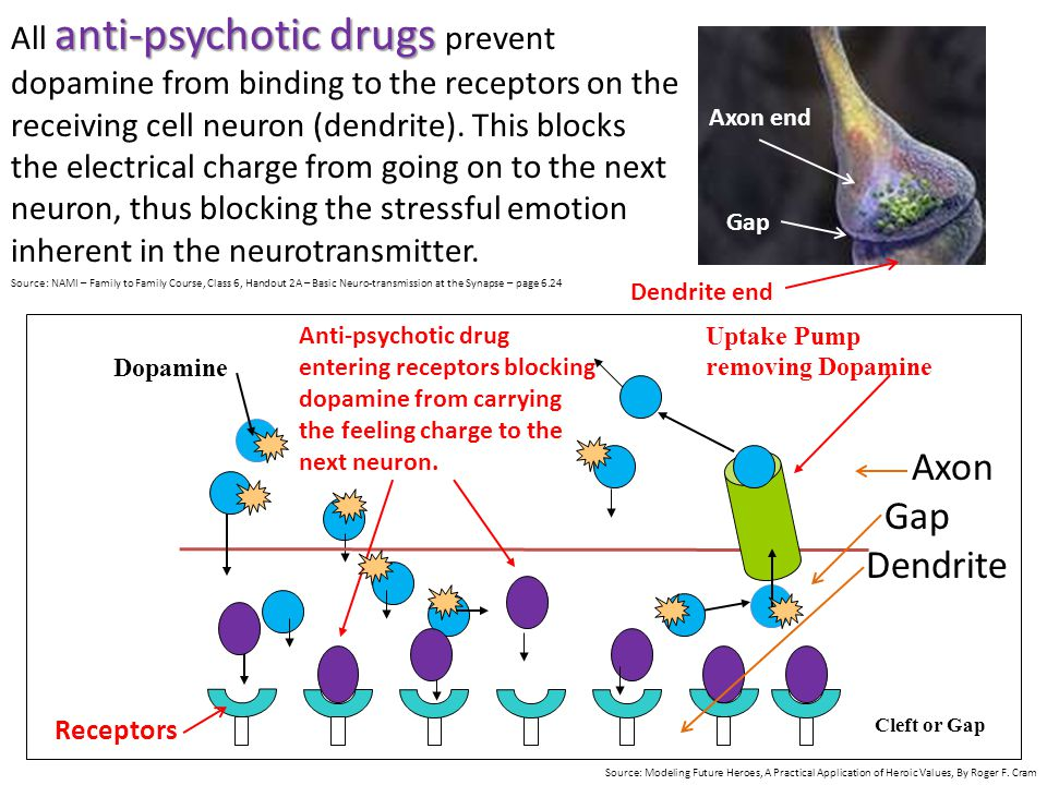 Uptake Pump removing DopamineDopamine Cleft or Gap anti-psychotic drugs All anti-psychotic drugs prevent dopamine from binding to the receptors on the receiving cell neuron (dendrite).