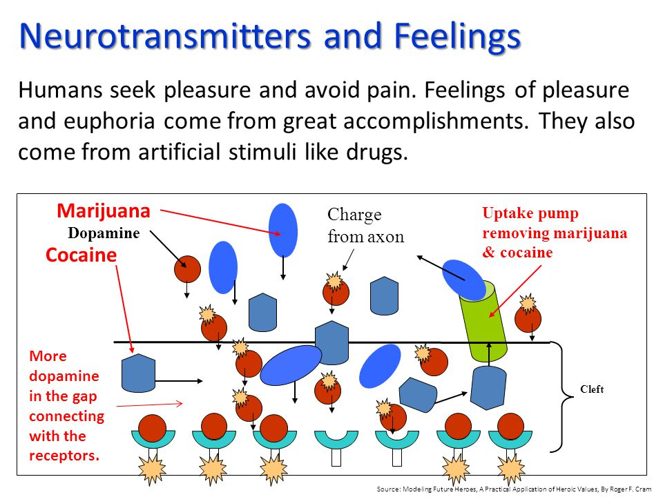 Dopamine Cleft Neurotransmitters and Feelings Neurotransmitters and Feelings Humans seek pleasure and avoid pain. Feelings of pleasure and euphoria co