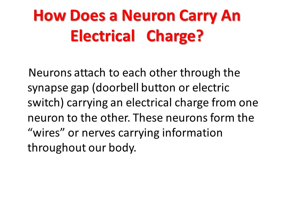 How Does a Neuron Carry An Electrical Charge.