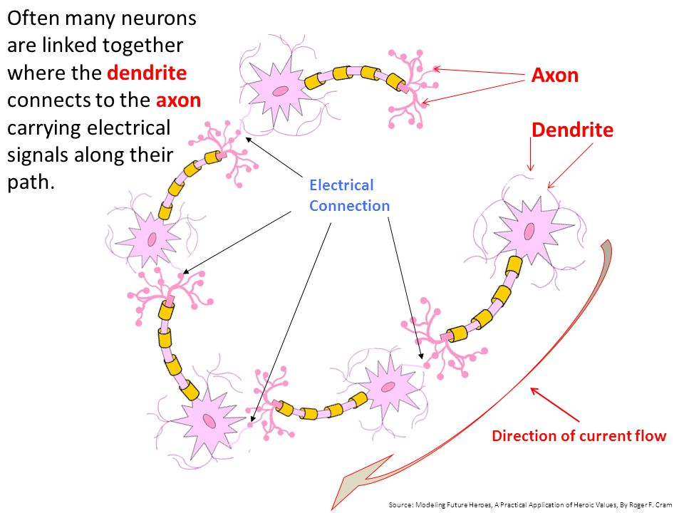 Electrical Connection Often many neurons are linked together where the dendrite connects to the axon carrying electrical signals along their path. Axo