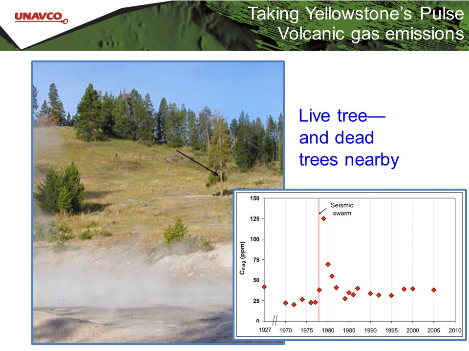 Taking Yellowstone's Pulse Volcanic gas emissions Live tree— and dead trees nearby