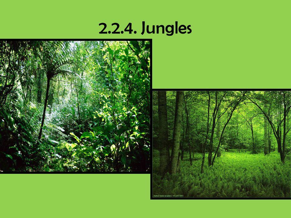 2.2.4. Jungles