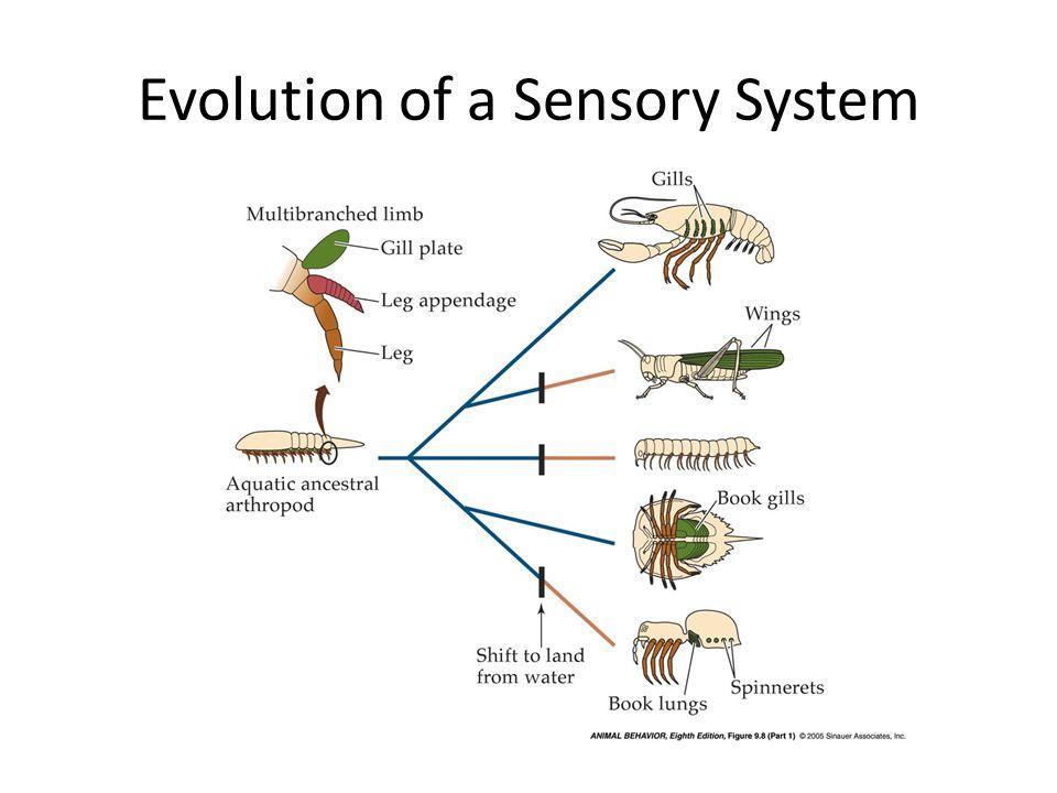 Evolution of a Sensory System