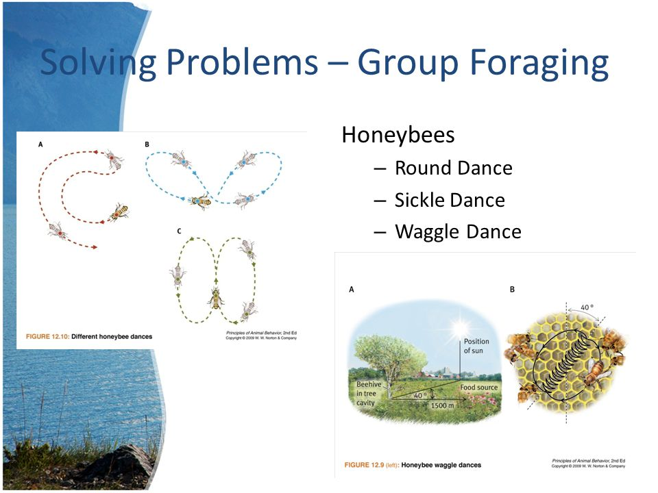 Solving Problems – Group Foraging Food Bonanzas – Yell for others