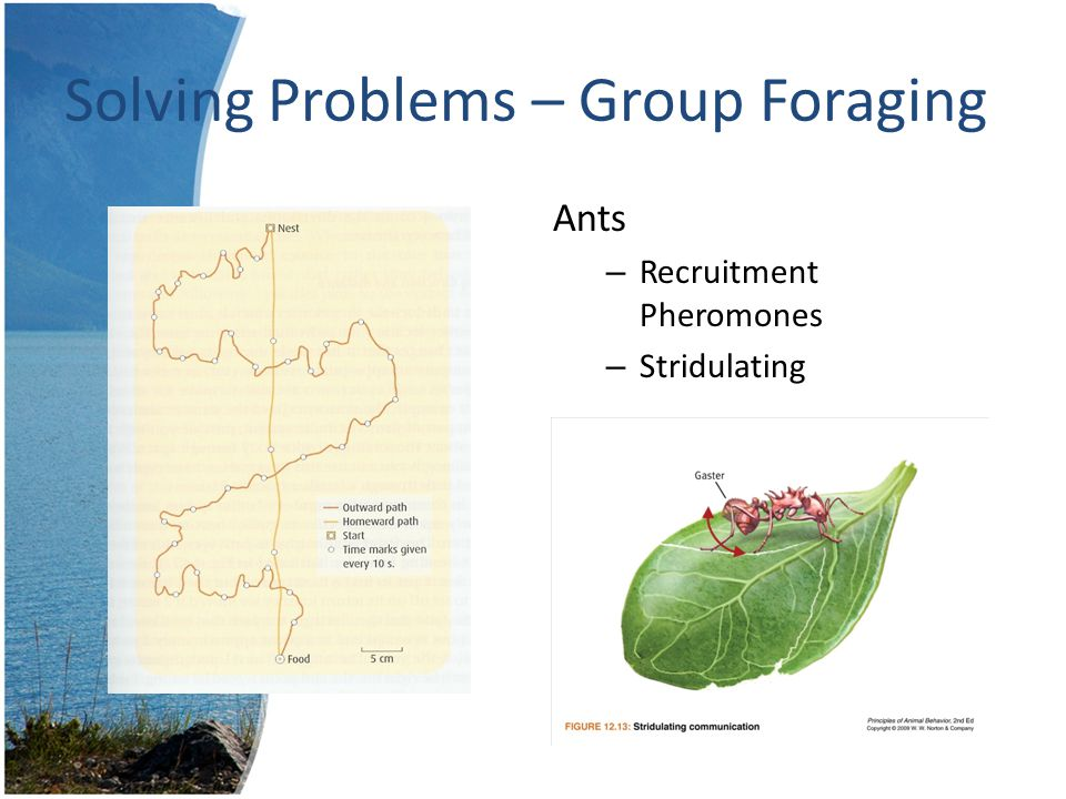 Solving Problems – Group Foraging Honeybees – Round Dance – Sickle Dance – Waggle Dance