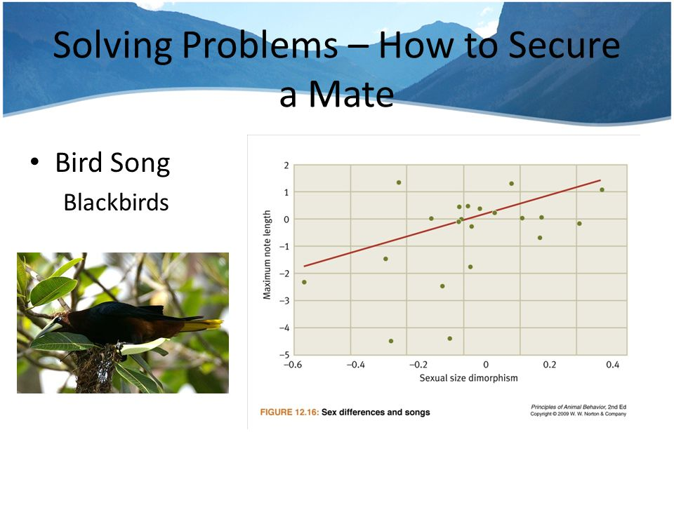 Solving Problems – How to Secure a Mate Bird Song – Cowbird