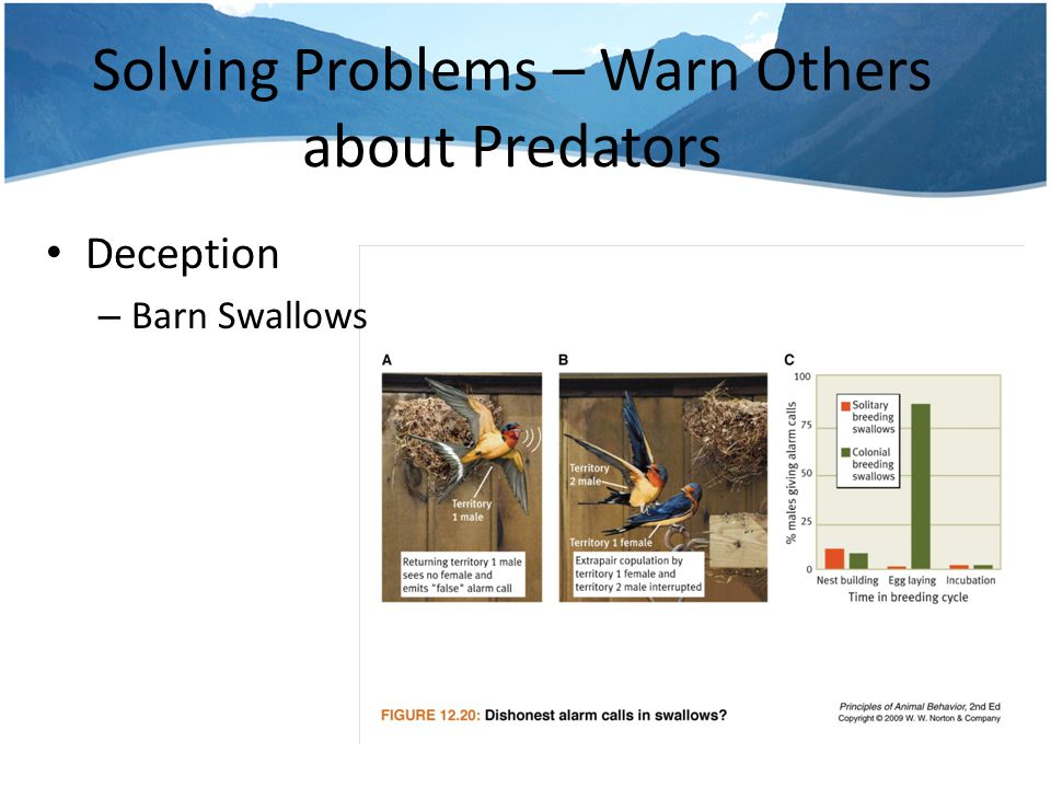 Solving Problems – Warn Others about Predators Deception – Low ranking Males