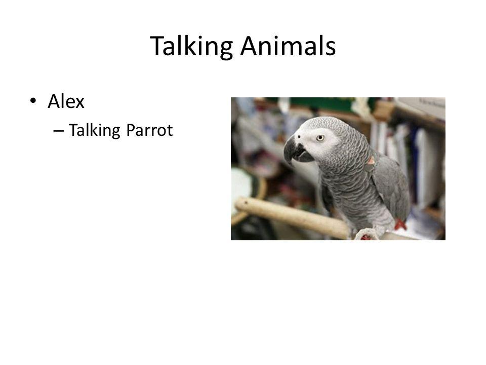 Talking Animals Nim Chimpsky – Talking Chimp