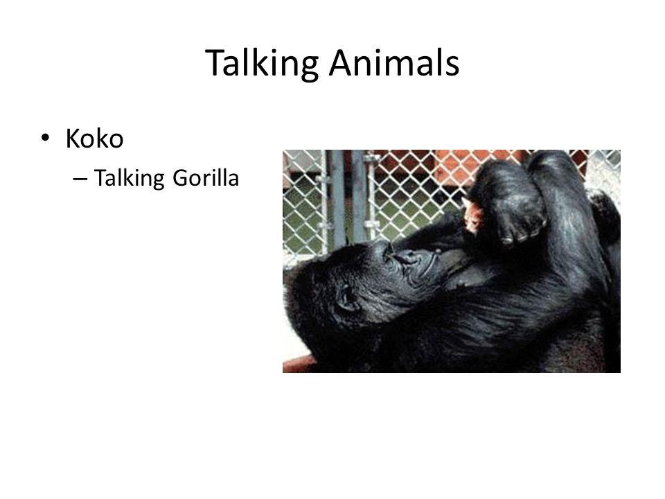 Talking Animals Alex – Talking Parrot