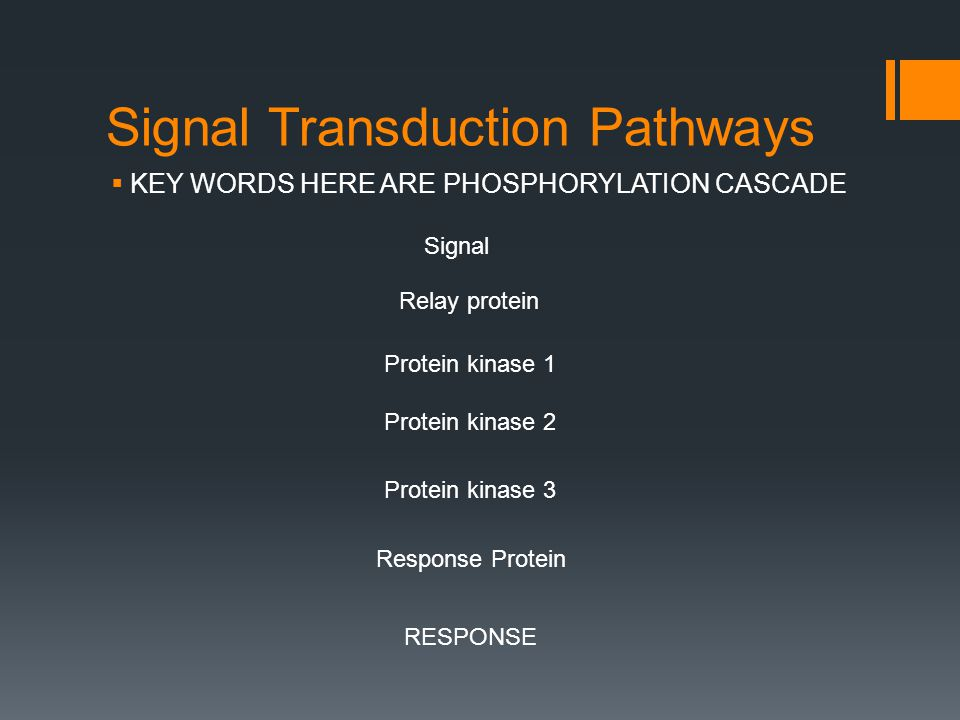 Signal Transduction Pathways  KEY WORDS HERE ARE PHOSPHORYLATION CASCADE Signal Relay protein Protein kinase 1 Protein kinase 2 Protein kinase 3 Response Protein RESPONSE