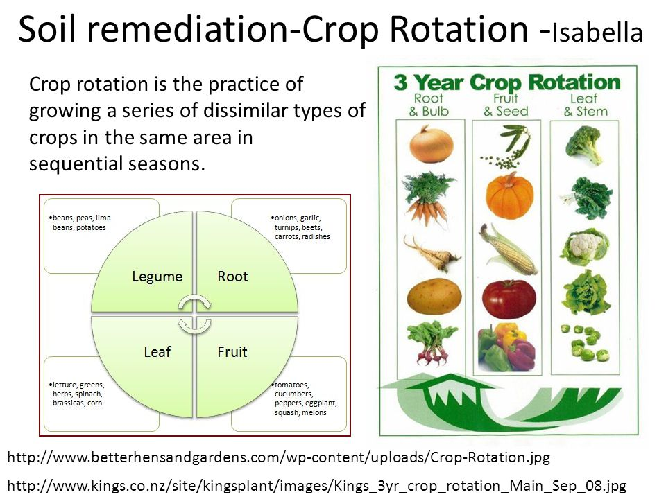 Soil remediation-Crop Rotation - Isabella Crop rotation is the practice of growing a series of dissimilar types of crops in the same area in sequentia